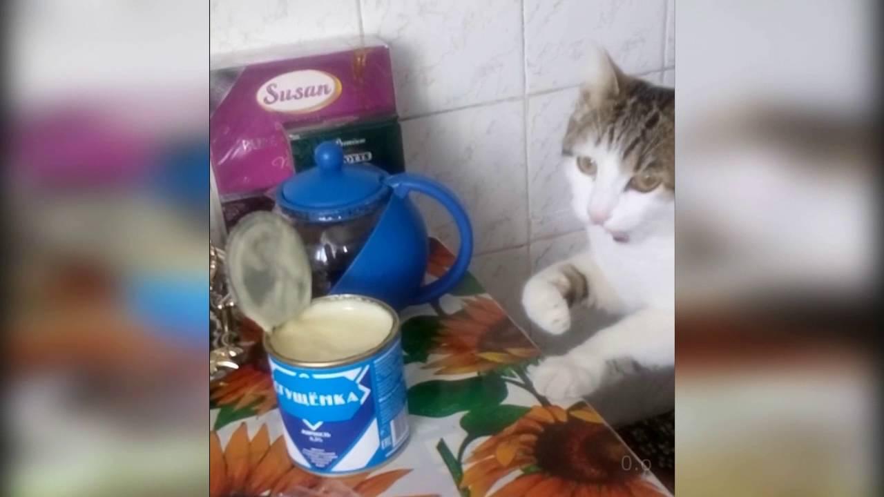 Кошка ест сгущенку