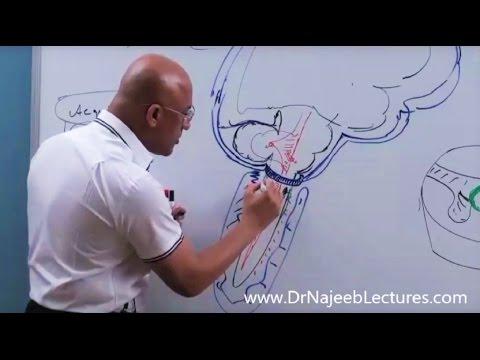 Adalah helmintologie