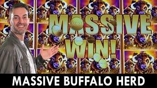 MASSIVE Buffalo Herd 🐃  Seven Feathers Casino in Oregon! #ad