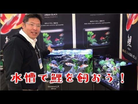 デカイ、美しい…1m超えの錦鯉に感動。水槽でも鯉飼ってみませんか♪