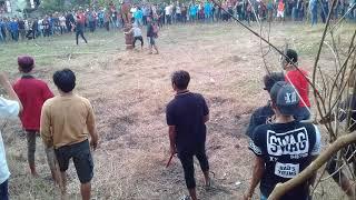 preview picture of video 'Acara Kwangkay potong kerbau'