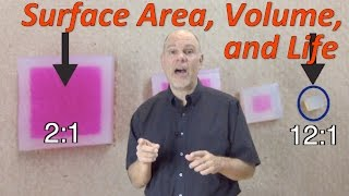 Surface Area, Volume, and Life