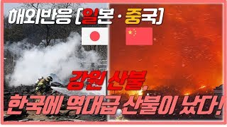 [해외반응x세반채] 강원대형산불 속보로 보도하는 일본뉴스, 일본반응, 중국반응. 속초산불