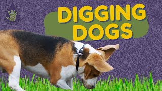 Digging Should be a 4 Letter Word!