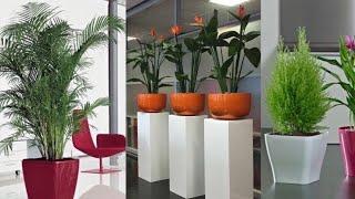 Beautiful Indoor Garden Plants 🌱 Interior Decor Ideas