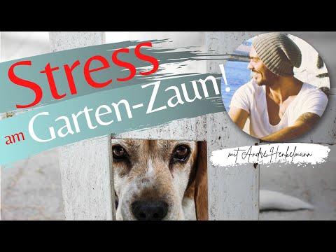 Stress am Gartenzaun! Wenn der Hund im Garten pöbelt inklusive Lösungsweg!