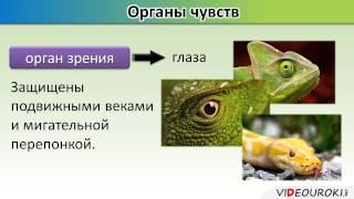 """Урок по биологии """"Внутреннее строение пресмыкающихся"""""""