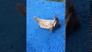 العثور على مخلوق غريب في البرازيل يثير حيرة الإنترنت