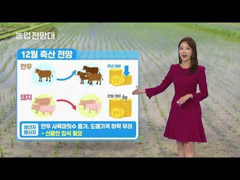 YTN 농업전망대(축산 관측 12월) (2019.12.05) 이미지
