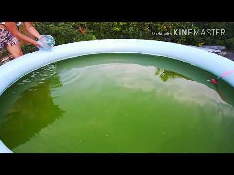 Как очистить бассейн от зелени.