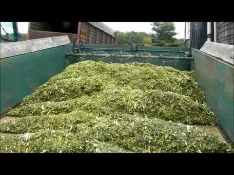 Unloading Corn Silage Into Silo