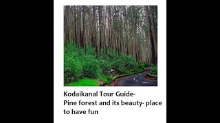 Kodaikanal Travel Guide -7   Pine forest and its beauty