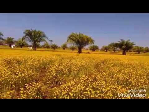 ขี้ผึ้งและครีมจากโรคสะเก็ดเงินจากประเทศจีน