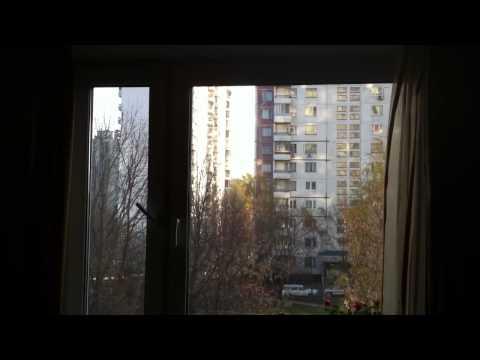 К чему птица стучит в окно и что делать с этой приметой?