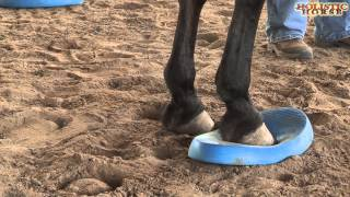 Help For Recovery From Laminitis