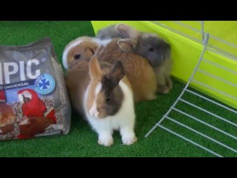 CONEJOS- La jaula ideal para los conejos. ¿Cómo debe ser?