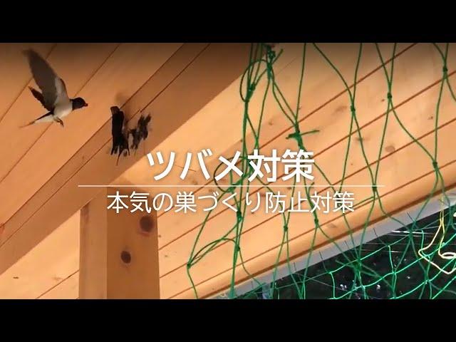 本気のツバメ対策 巣づくり防止