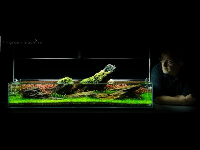 Aquarium Aquascape Tutorial Guide 'Crimson Sky' by James Findley & The Green Machine