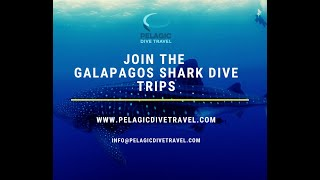 Ecuador is open. If you looking at seeing Whale Sharks & support a conservation effect then this is the trip for you!