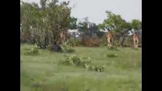 Animaux au parc Niokolo koba