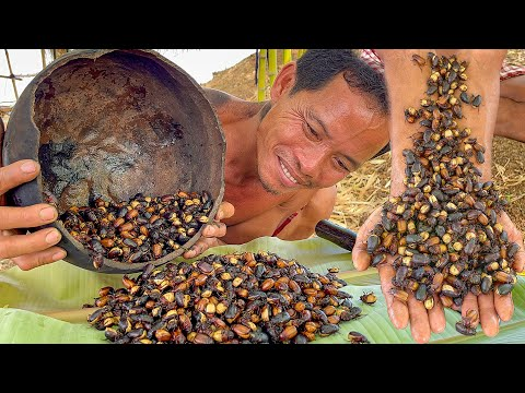 June Bugs Cooking Recipe is So Delicious in My Country – Primitive Culture