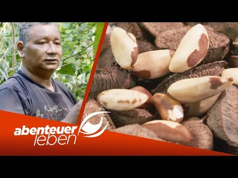Paranuss aus dem Regenwald: Die Besonderheiten des Superfoods | Abenteuer Leben | kabel eins