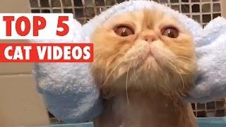 animale fazele saptamanii cu pisici