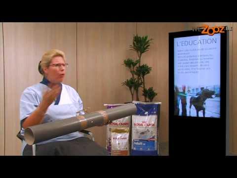 Les préparations pour le traitement ladonno-podochvennogo du psoriasis