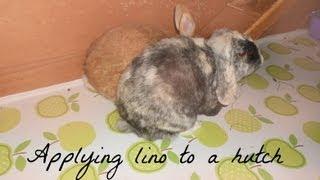 Applying lino to a rabbit hutch