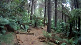 Riding into the forest from Carpark, via Ever-Ready trail