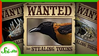 5 Toxins Animals Steal For Themselves