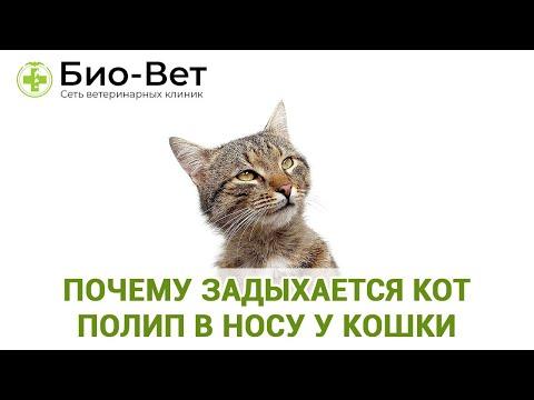 Почему Задыхается Кот & Полип В Носу У Кошки. Ветклиника Био-Вет
