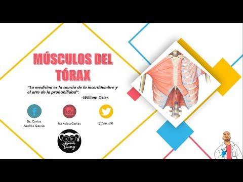 Tratamiento de la osteoporosis osteoartritis