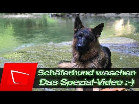 Schäferhund Sam richtig waschen - Hundeshampoo Tipps und Tricks - ein Spaß!