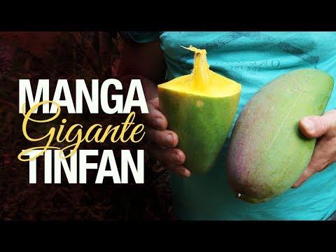 Manga Tinfan Gigante: uma das maiores do mundo