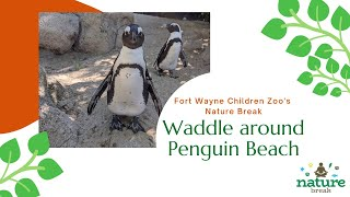 Afternoon Penguin Swim at the Fort Wayne Children's Zoo