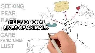 Do animals have emotions? An introduction to Panksepp | Animated Series Episode 8