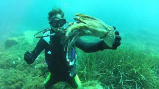 Alex et le poulpe
