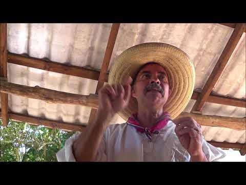 Vanille aus Mexico, das Ursprungsland der Vanille, dochoc