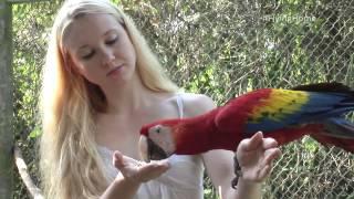 Xcaret saving scarlet macaw
