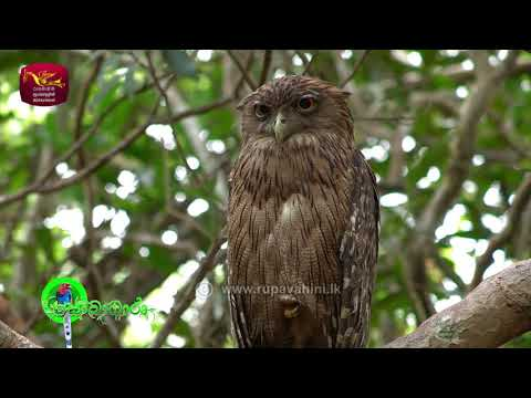 Sobadhara - සොබාධාරා | Season 2 | Episode - 23 | 2018-06-29 | Rupavahini Documentary