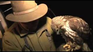 Fieldsports Britain – Lamping with hawks + Olympic shooting + cooking squirrels – episode 16