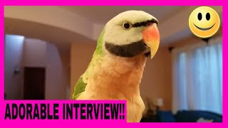 Interview With Picasso the Mustache Parakeet About Life and His Crazy Wife | PARROT VIDEO OF THE DAY