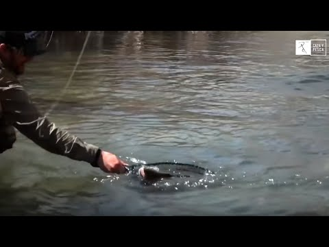 De pesca: Truchas en la selva de La Alcarria