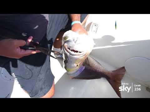 Mostra che pesca su unEsposizione