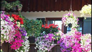 Bewässerungssysteme für Balkonpflanzen im Test   Marktcheck SWR