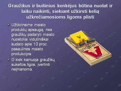Graužikai – užkrečiamųjų ligų platintojai
