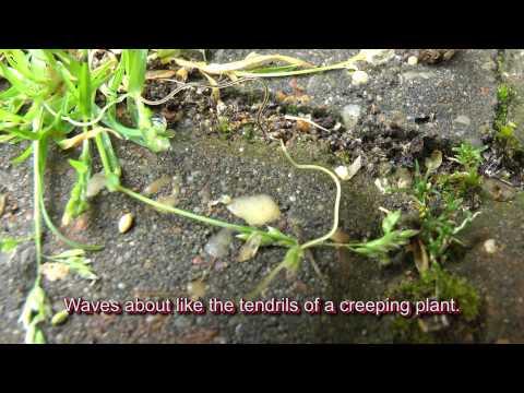 Worm dissolves worm