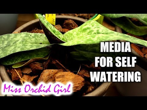 , title : 'Suitable Orchid media for self watering pots - Does bark work?