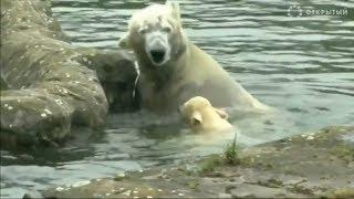 Лучшие видео о животных от агентства Рейтер